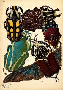 beetles pochoir by Seguy, early 1900s