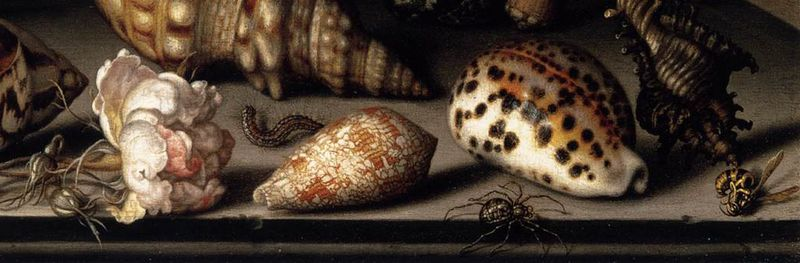 detail of Still-Life of Flowers, Shells, and Insects, 1635, Balthasar van der Ast