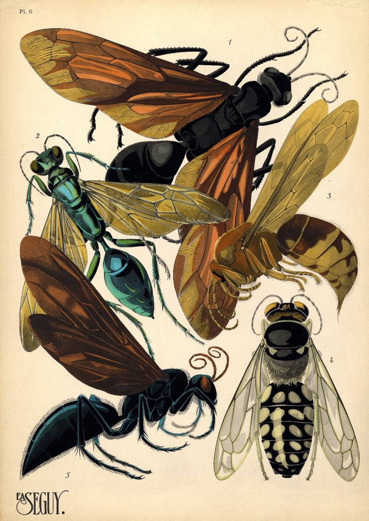 Which famous designers were/are inspired by insects?